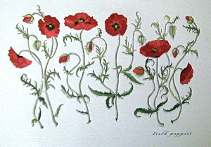 red-poppies-collection-2